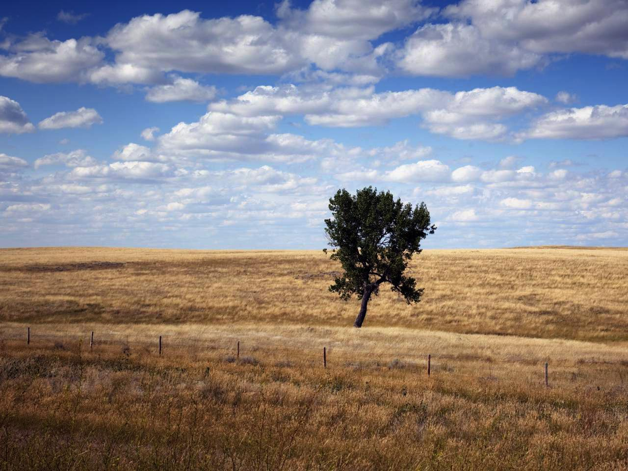 Brown grasslands receding into the horizon, with a single tree in the center of the frame.